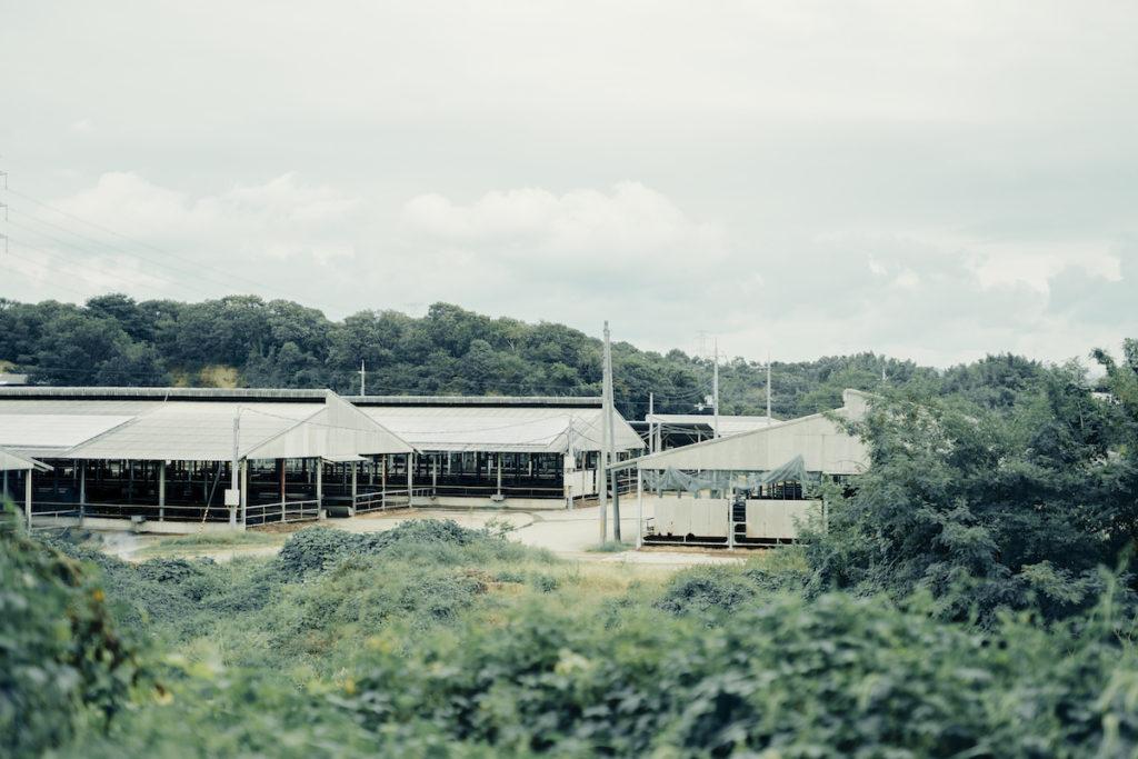 牧場の風景写真